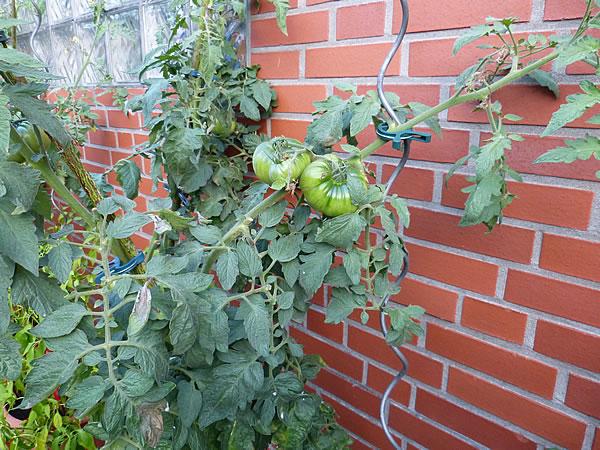 gaeste-wcgarten-17sept2014_1464