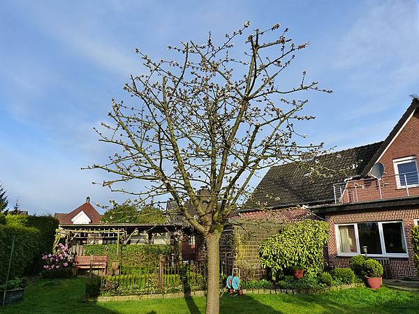 17April2015-Garten_2276