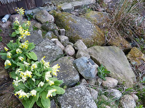 17April2015-Garten_2287
