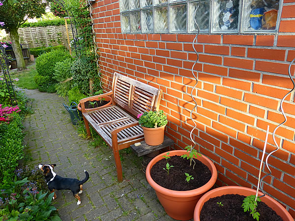 0-gepflanzt-hunde-videos-24mai2017_0229
